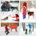 Top 10 Best Dog Cold Weather Coats in 2021 Reviews