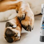 Top 10 Best Dog Nail Grinders for 2020 Reviews