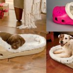 Top 10 Best Dog Beds for 2020 Reviews